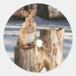 """Adorable """"Reindeer"""" Chipmunk Classic Round Sticker"""