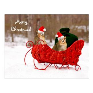 Adorable Santa Baby Chipmunks in Sleigh Postcard