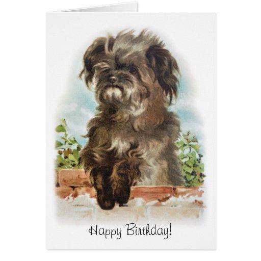 Adorable scruffy dog birthday card