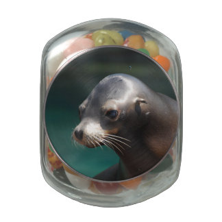 Adorable Sea Lion Jelly Belly Candy Jars