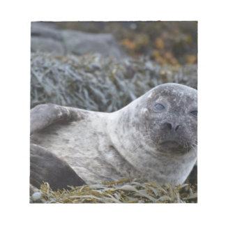 Adorable Seal Memo Pads