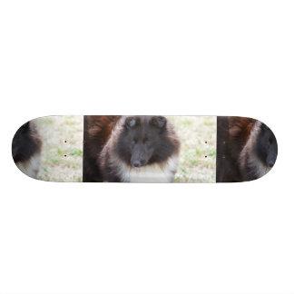 Adorable Sheltie Skateboard