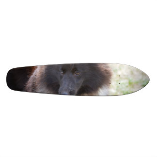 Adorable Sheltie Skateboard Deck