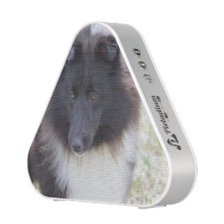 Adorable Sheltie Speaker