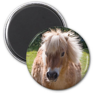 Adorable shetland pony head close-up magnet, gift 2 inch round magnet