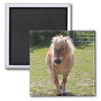 Adorable shetland pony magnet, gift idea 2 inch square magnet