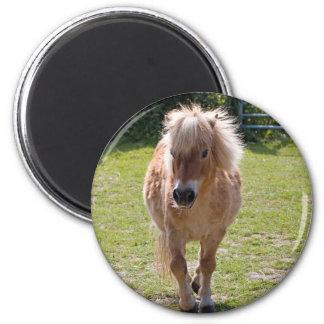 Adorable shetland pony magnet, gift idea magnet