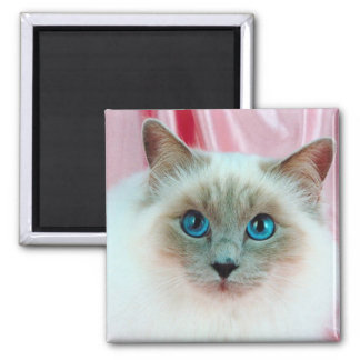 Adorable Siamese Cat 1 Magnets