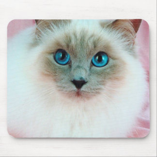 Adorable Siamese Cat 1 Mouse Pad