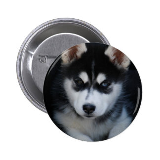 Adorable Siberian Husky Sled Dog Puppy Buttons