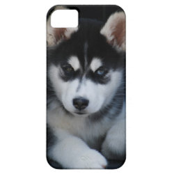 Adorable Siberian Husky Sled Dog Puppy iPhone SE/5/5s Case