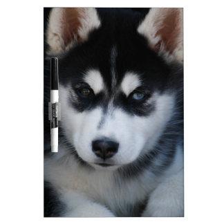 Adorable Siberian Husky Sled Dog Puppy Dry Erase Whiteboards