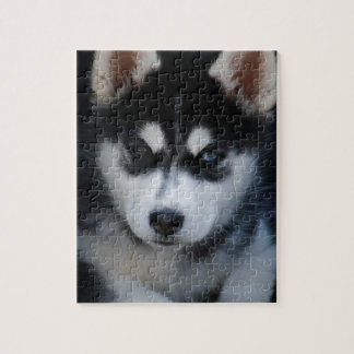 Adorable Siberian Husky Sled Dog Puppy Puzzle