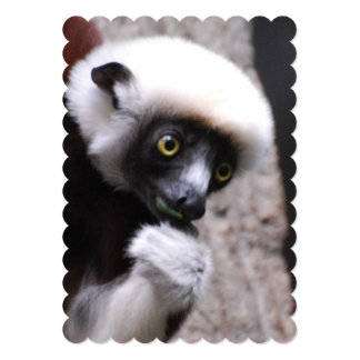 Adorable Sifaka Lemur Eating 5x7 Paper Invitation Card