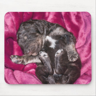Adorable Sleeping Poodle Puppy Mouse Pad