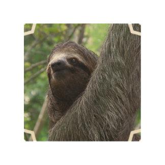 Adorable Sloth Wood Prints