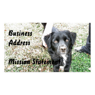 Adorable Smokey Poses for the Camera Double-Sided Standard Business Cards (Pack Of 100)