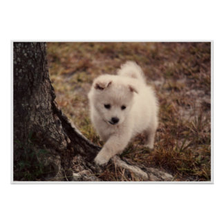 Adorable Snowball Puppy Poster