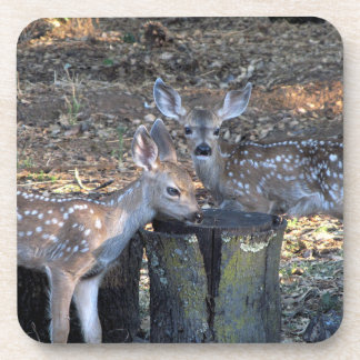 Adorable Spotted Fawns Coasters
