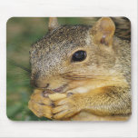 Adorable Squirrel Eating Peanut Photo Mouse Pad