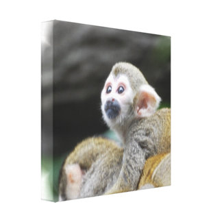 Adorable Squirrel Monkey Canvas Print
