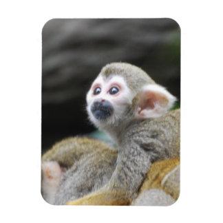 Adorable Squirrel Monkey Flexible Magnet Rectangle Magnet