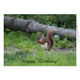Adorable Squirrel Sitting in the Grass Birthday Card