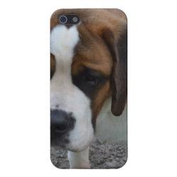 Case Savvy iPhone 5 Matte Finish Case with Saint Bernard Phone Cases design