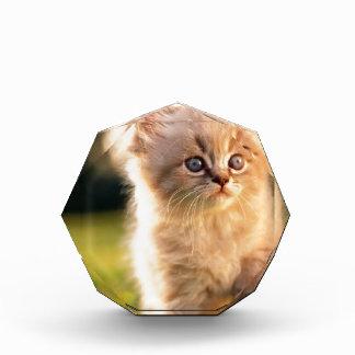 Adorable Stop Motion Kitten Acrylic Award