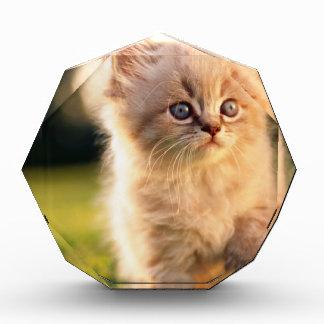 Adorable Stop Motion Kitten Award