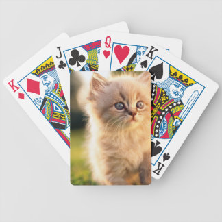 Adorable Stop Motion Kitten Bicycle Playing Cards