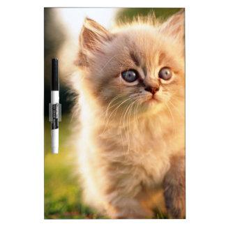 Adorable Stop Motion Kitten Dry Erase Board