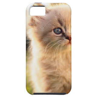 Adorable Stop Motion Kitten iPhone SE/5/5s Case