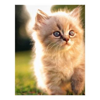 Adorable Stop Motion Kitten Letterhead