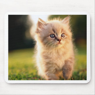 Adorable Stop Motion Kitten Mouse Pad