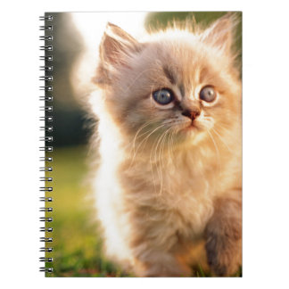Adorable Stop Motion Kitten Notebook