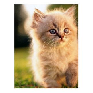 Adorable Stop Motion Kitten Postcard