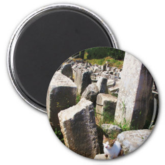 Adorable stray cat living in the ruins of Ephesus 2 Inch Round Magnet