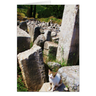 Adorable stray cat living in the ruins of Ephesus Card