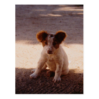 Adorable Stray Puppy Postcard