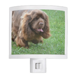 Adorable Sussex Spaniel Night Lights