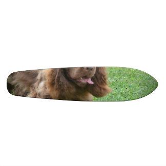 Adorable Sussex Spaniel Skate Board