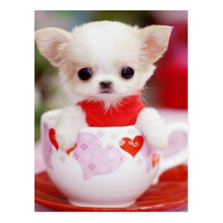 adorable teacup puppy postcard