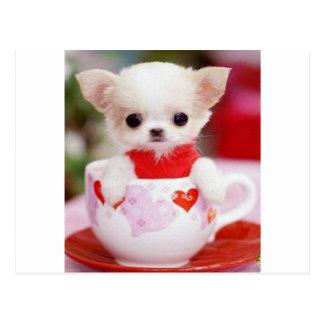adorable teacup puppy postcard