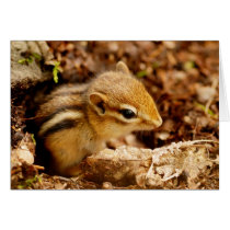Adorable Teeny Baby Chipmunk Card