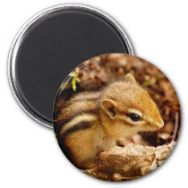 Adorable Teeny Baby Chipmunk Magnet