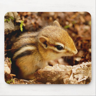 Adorable Teeny Baby Chipmunk Mousepad