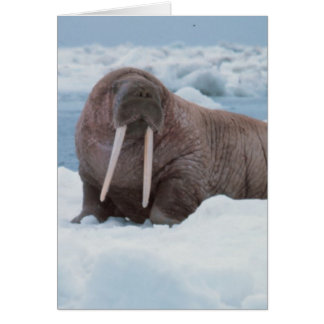 Adorable Walrus Greeting Card