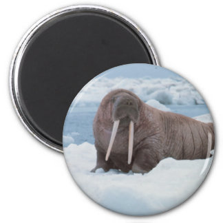 Adorable Walrus 2 Inch Round Magnet