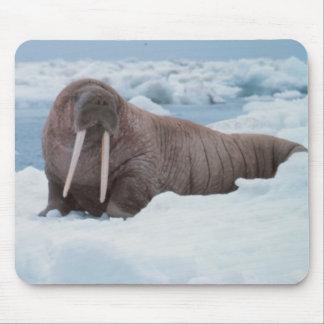 Adorable Walrus Mouse Pad